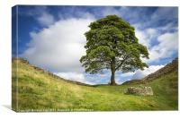 "Sycamore Gap (the ""Robin Hood Tree""), Canvas Print"