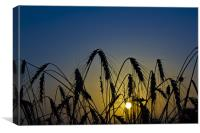 Wheat Sunrise, Canvas Print