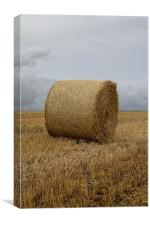 fields of gold., Canvas Print