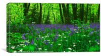 Bluebell Carpet, Canvas Print
