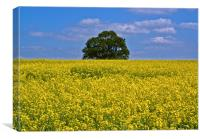 Late Spring Colours - Rape Field, Canvas Print