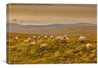 Winter on the Moors, Canvas Print