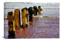 Worn and Weathered, Canvas Print