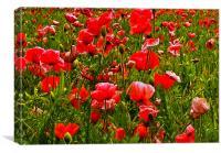 Meadow Flowers, Canvas Print