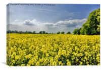 Field of Gold, Canvas Print
