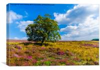 Heather North Yorks Moors, Canvas Print