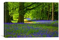 Bluebell Wood - Thorpe Perrow, Canvas Print