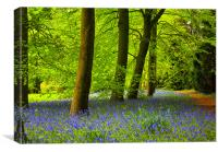 Bluebells in Spring, Canvas Print