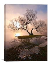 Tree In Fog, Canvas Print
