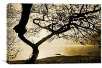 Tree Of The Mist, Ullswater, Canvas Print