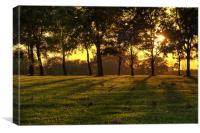 Sunset Tree Shadows, Canvas Print