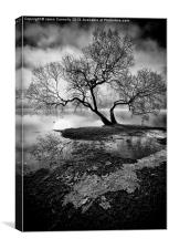 The Old Tree Ullswater, Canvas Print