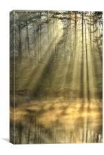 Sunrays At Tarn Hows, Canvas Print