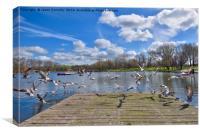 Stanley Park Seagulls, Canvas Print