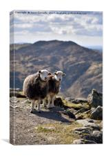 The Langdale Herdies, Canvas Print