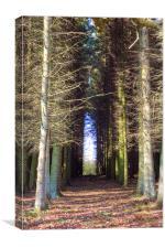 The Dense Wood, Canvas Print