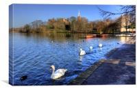 Swans glide past, Canvas Print