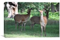 Deer in Richmond Park, Canvas Print
