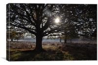 Sunny Trees in Richmond Park, Canvas Print