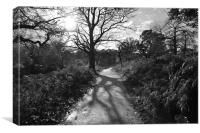 Sunny Path in Richmond Park, Canvas Print