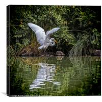 Egret Hunting, Canvas Print