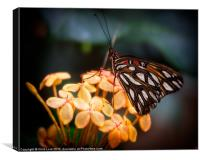 Tropical Butterfly, Canvas Print