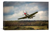 Shark Nosed P-51 Mustang at Goodwood, Canvas Print