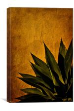 Agave on Adobe, Canvas Print