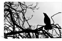 Black Crow, Canvas Print