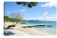 Crooked Tree In Puerto Pollensa, Canvas Print
