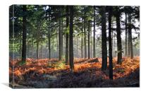 Golden Forest, Canvas Print