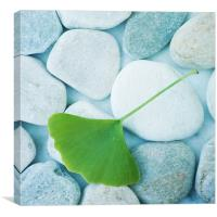 stones and a gingko leaf, Canvas Print