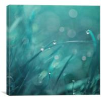 morning droplets, Canvas Print
