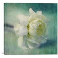 carnation, Canvas Print