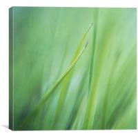 feathery, Canvas Print