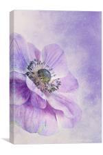 anemone, Canvas Print