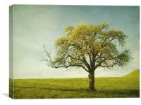 appletree, Canvas Print