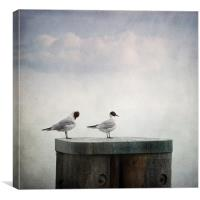 seagulls, Canvas Print