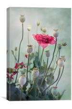 Pods, Buds & Flowers, Canvas Print