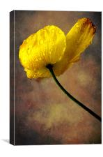 Rock Rose, Canvas Print