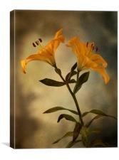 Yellow Lily on stem, Canvas Print