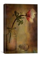 Anemone , Canvas Print