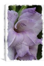 Purple gladioli, Canvas Print