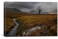 Rannoch Moor Highlands, Canvas Print