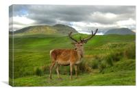 Red Deer Vale of Orchy Scotland, Canvas Print