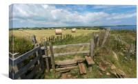 Straw bales at harvest time on the cornwall coast, Canvas Print