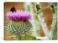 Bee Gathering Thistle