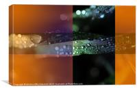 Dew triptych, Canvas Print