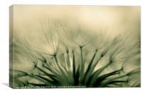 Dandelion crown, Canvas Print