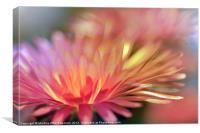 Majectic purslane flower, Canvas Print